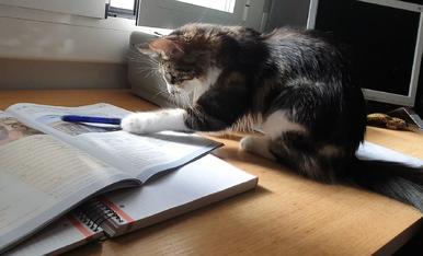 Mi gata ayudándome con el inglés