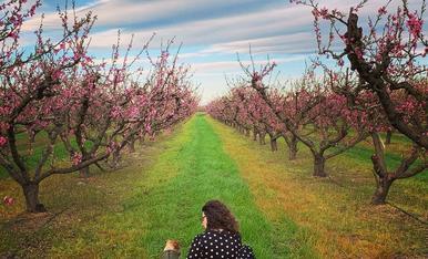 Un dia molt feliç. Donem la benvinguda a la primavera. Ella ens mostra l'esclat de flors, una bellesa que ens deixa sense paraules. (fotografia dels arbres fruiters d'Aitona)