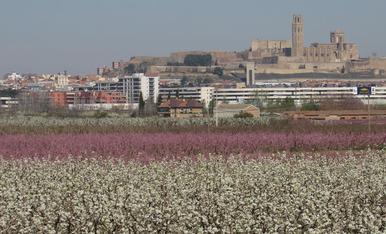 Us mostro aquesta fotografia captada des de la partida de Fontanet a l'Horta de Lleida, des d'aquest punt podem gaudir cada primavera de la bellesa que ens ofereixen els camps florits de l'Horta amb la ciutat de Lleida de fons.