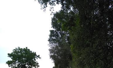 Passejos per la riba del riu Segre