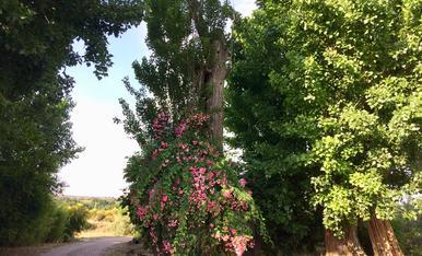 És primavera. Aquest matí passejant per l'horta de Lleida