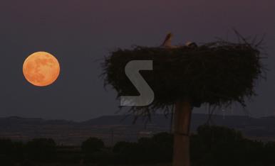 © Lluna de rosa des de l'estany d'Ivars i Vila-sana