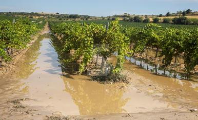 Una tempesta descarrega 24 l/m² a l'Urgell