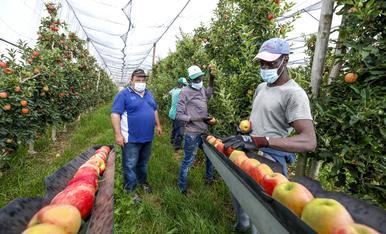© Precaució per a la campanya de poma i pera