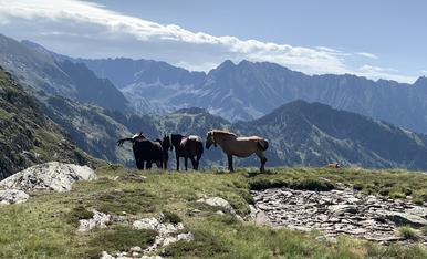 Vacances al Pallars Sobirà. Estany de la Mariola.