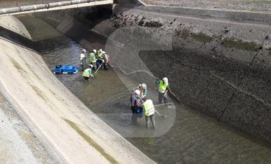 © Salven peixos abans de buidar el canal de Balaguer