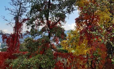 Tu tiempo el otoño