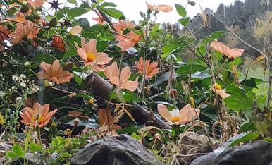 Flors de la tardor