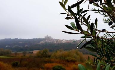 Entre la boira i les oliveres... Ciutadilla