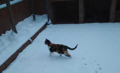 Els gats proven la neu