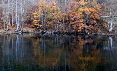 L'hivern ha arribat als aiguamolls de la Torrassa