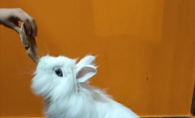 La meva mascota és diu Blanqueta