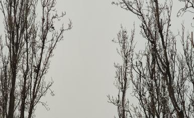 I la neu va arribar i ens deixa una postal com aquesta