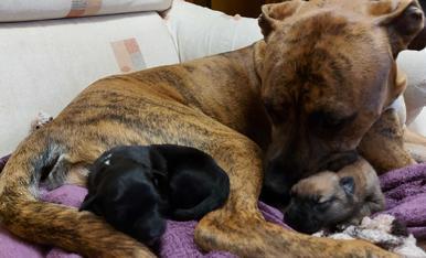 Me llamo Dalko tengo un año mi Mami humana acoge perritos abandonados para ser adoptados y yo se los cuido también