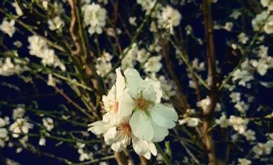 Flors d'hivern