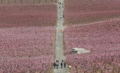 Visites als camps florits d'Aitona i Torres de Segre