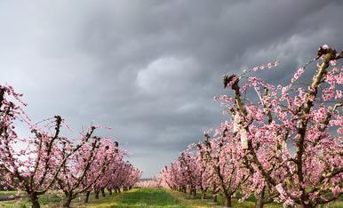 """A la """"simpàtica"""" també li agrada gaudir dels arbres florits de Torres de Segre"""