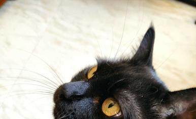 Lu, negre com el carbó, carinyosa com ningú, amb aquests ullets et roba el ❤️