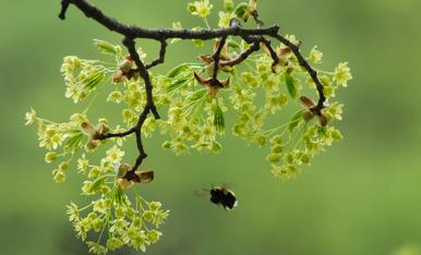 Els insectes s'afanyen a buscar els primers brots, per fer la seva feina