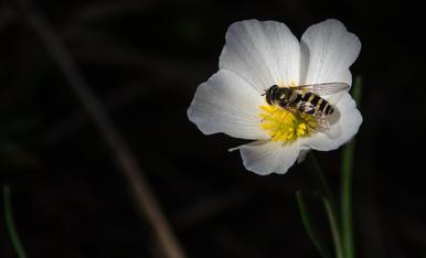 La primavera ha arribat i els insectes començen la seva activitat