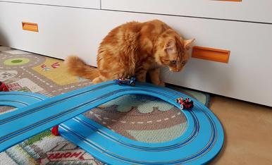 Això d'aquí es mou molt ràpid!!! El Puça disfruta veien els cotxes correr