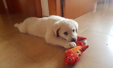 L'Spik li encanta jugar amb les joguines dels gats