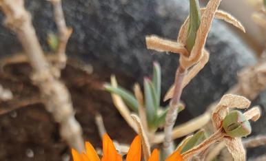 Les flors acaben apareixent després de l'hivern.
