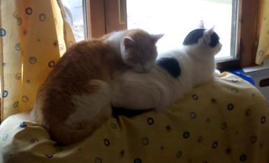 els meus gats també s'estimen