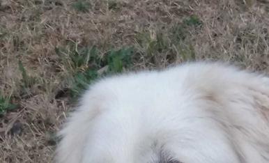Lo nostre Terri, té 2 anys, és un muntanya dels pirineus, originari d'Esterri de Cardos . Lo nostre millor amic.