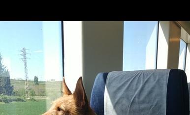 El meu amic Willy de viatge en tren cap a Lleida.