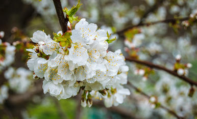 Tu tiempo, la primavera 2021 (Parte II)