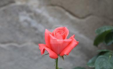Garrigues en Flor