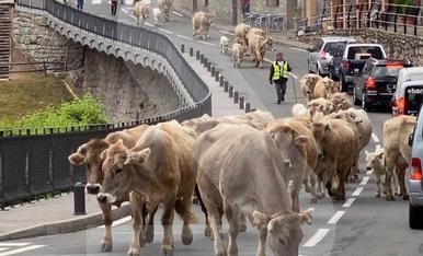 © Vaques en lloc