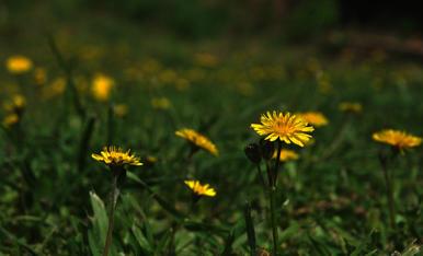 Entapissat de verd i groc