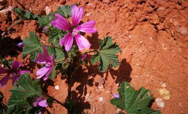 Flors nascudes al marge