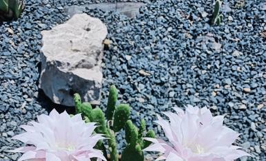 Flors d'un dia que broten a l'estiu...L'estiu és vida.
