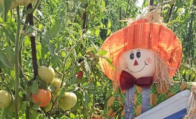 Tomates de Lleida