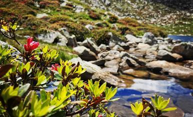 Flora i natura al Circ de Pessons. Andorra