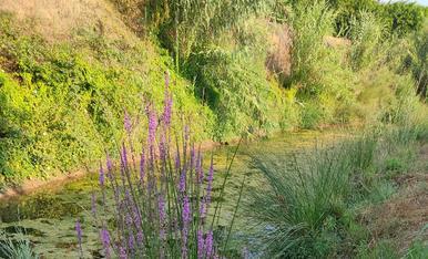 Refugi de flora a la riba del riu Set, a Montoliu de Lleida