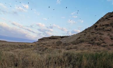A trenc d'alba, abundant avifauna a tocar de l'antic poblat de Tabac