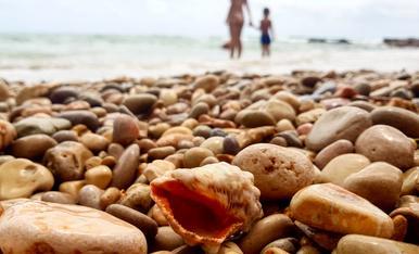 I la closca del caragol de mar, despullat de la seva vida grava per sempre mes el soroll del mar