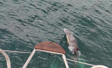 Des de un veler a Gibraltar, passejavem amb els dofins aquest estiu
