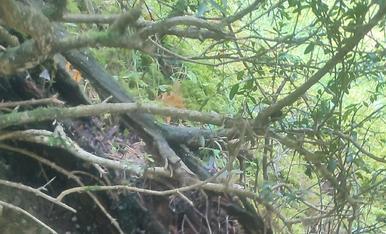 Un bosc de camagrocs, impresionan no he disfrutat tan com aquest dia