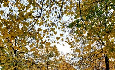 Catifa de fulles