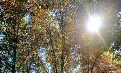 El sol s'obre pas entre de les fulles que cauen .