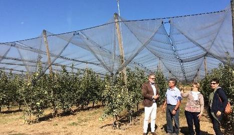 La finca Tarrés té cobertes set de les catorze hectàrees amb xarxes antipedra.
