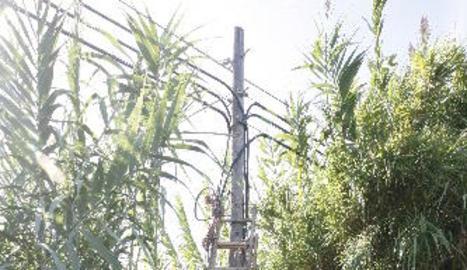 Operaris de Telefónica van treballar per restablir el servei.