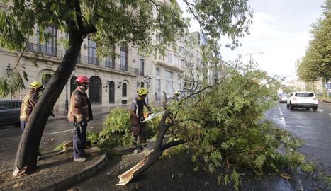 El Bombers treballen per retirar un arbre caigut a l'avinguda de Madrid
