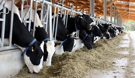 Imatge d'una granja de producció de llet de les comarques de Lleida.