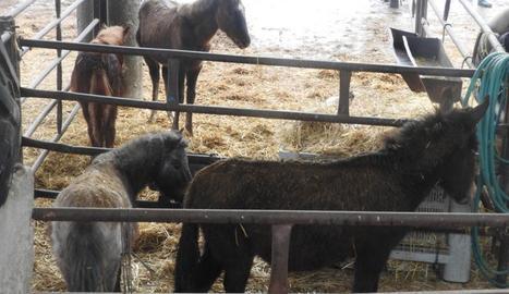 Alguns dels cavalls que van ser confiscats dissabte.